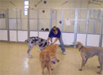 Preppy Pet Training