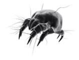 Hygienitech Bedbugs