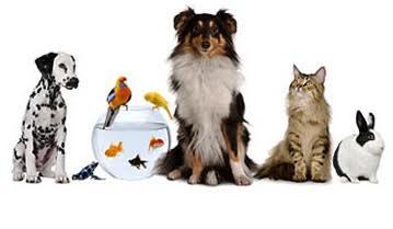 Pets Warehouse Franchise