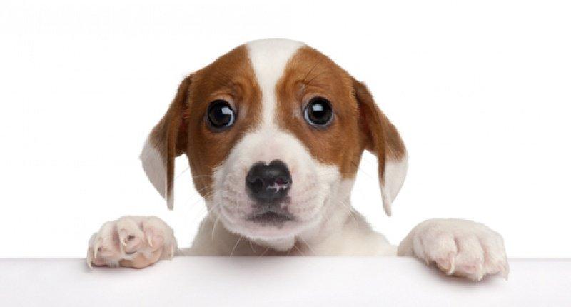 Unsubscribe - sad puppy